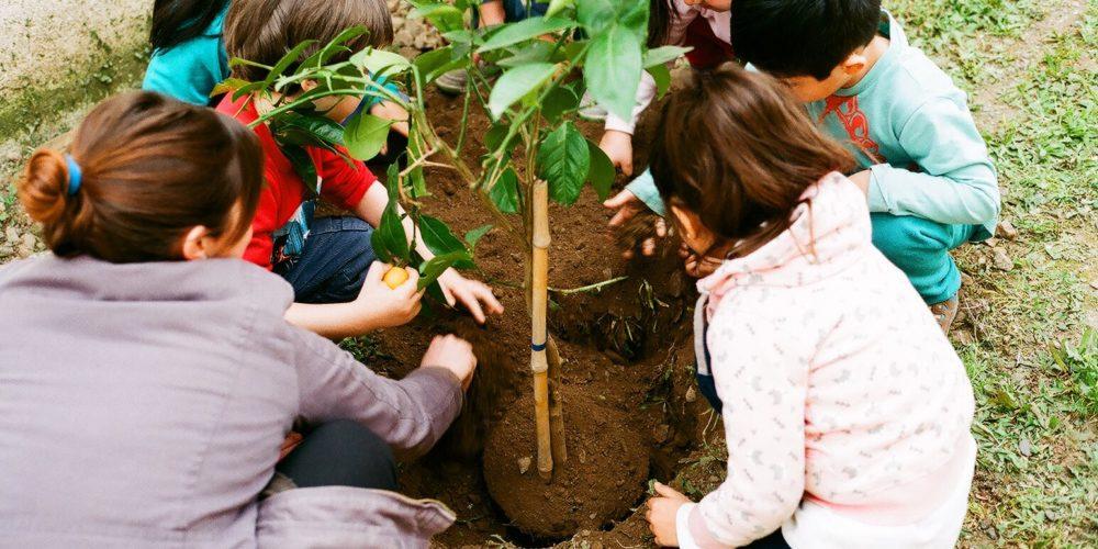 Jardins curadores, por Doris Erlwein