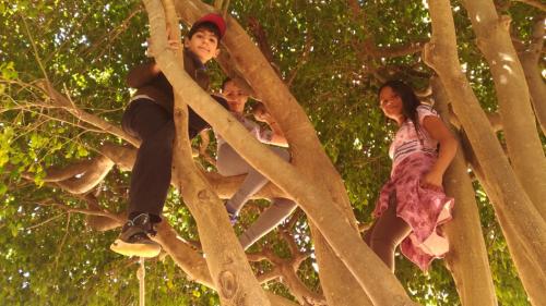 Crianças na árvore