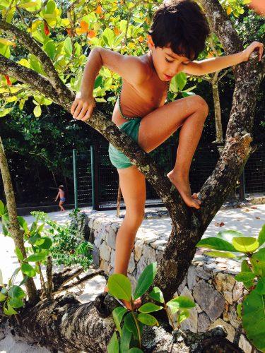 Menino em árvore