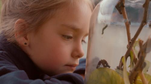 Uma menina usando um moletom azul escuro, olha atentamente para uma redoma de vidro. Dentro se encontram lagartas, em galhos e folhas. No canto superior esquerdo se encontra o logo do filme