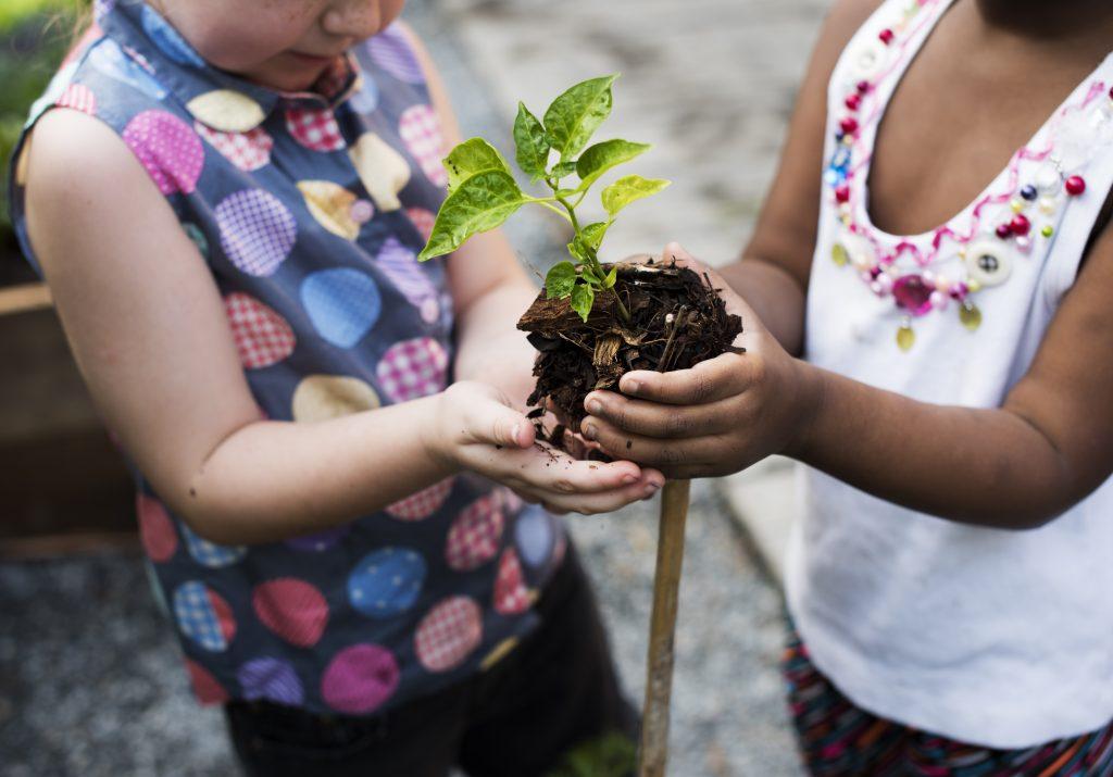 Duas mãos de criança seguram, em primeiro plano, uma muda de planta.